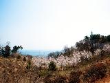 춘분(3월 21일)