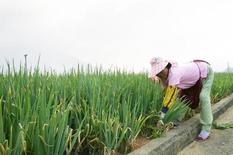 농업인의 날