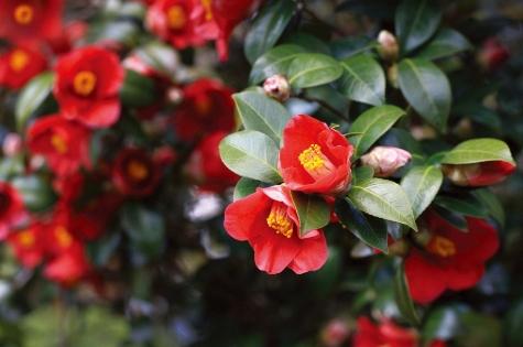 꽃과 나무(동백꽃과 동백나무)